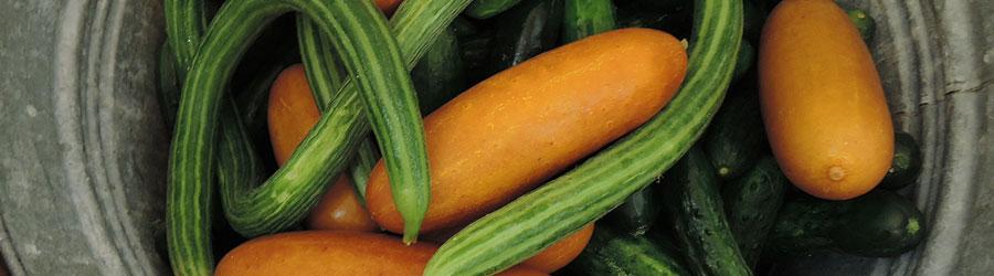 Cucumbers-2